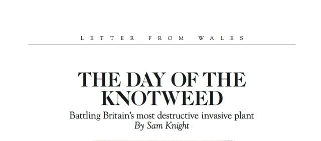 Knotweed headline